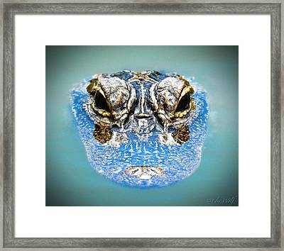 From The Series I Am Gator Number 4 Framed Print