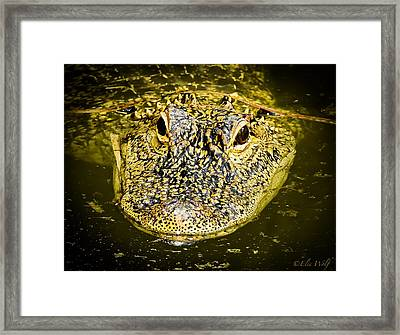 From The Series I Am Gator Number 5 Framed Print