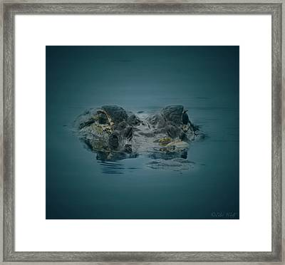 From The Series I Am Gator Number 6 Framed Print