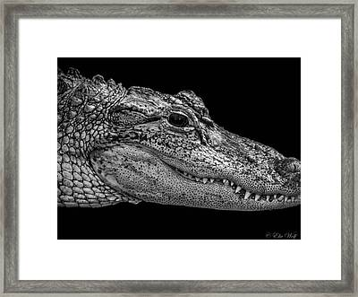 From The Series I Am Gator Number 9 Framed Print