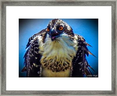 From The Series The Osprey Number 3 Framed Print