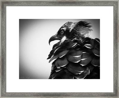 From The Series The Osprey Number 4 Framed Print