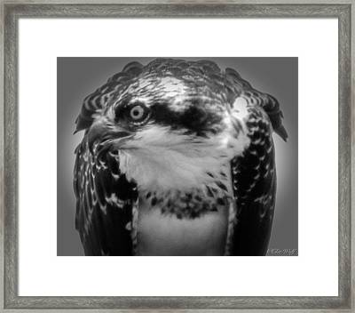 From The Series The Osprey Number Two Framed Print
