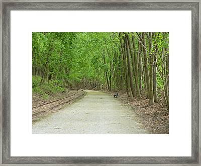 From The Summit Framed Print by Donald C Morgan