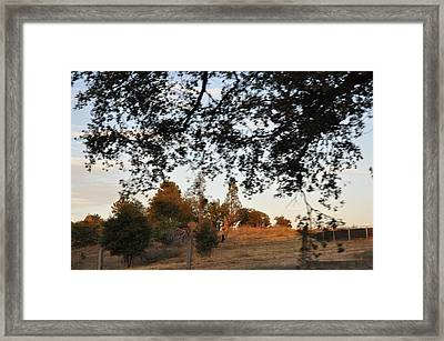 From Under The Trees Framed Print