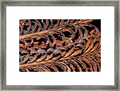 Framed Print featuring the photograph Fronds  by Diane Merkle