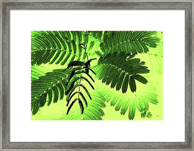 Fronds Framed Print by Gerlinde Keating - Galleria GK Keating Associates Inc