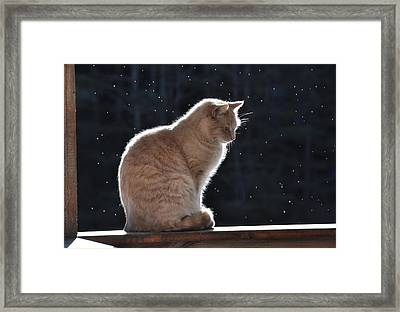 Front Porch Cat Framed Print by Gerald Hiam