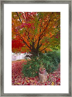 Front Yard Framed Print by Bruce Thompson