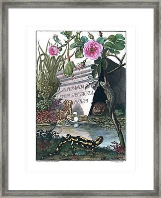 Frontis Of Historia Naturalis Ranarum Nostratium Framed Print