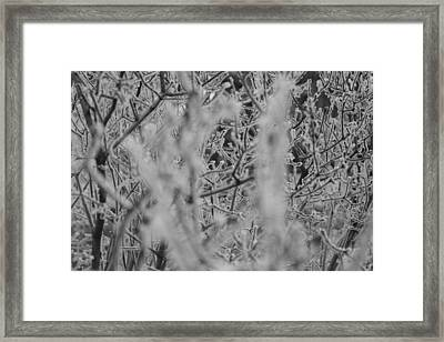 Frost 2 Framed Print by Antonio Romero