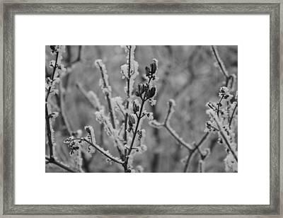 Frost 5 Framed Print