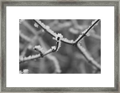 Frost 6 Framed Print by Antonio Romero