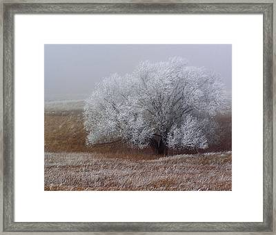 Frost And Fog Framed Print