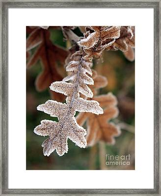 Frost Covered Oak Leaf Framed Print