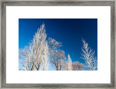 Frost Covered Trees Framed Print by Todd Klassy