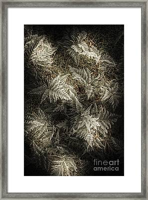 Frost Ferns Framed Print