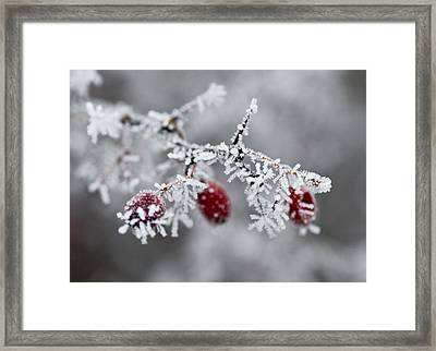 Frost Framed Print by Frank Tschakert