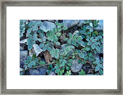 Frost Framed Print by JAMART Photography