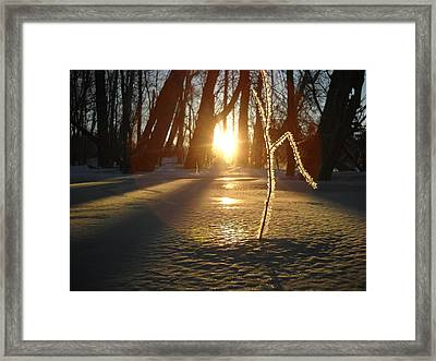 Frost On Sapling At Sunrise Framed Print