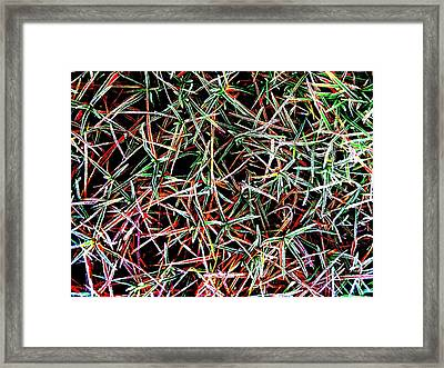 Frost On The Grass Framed Print