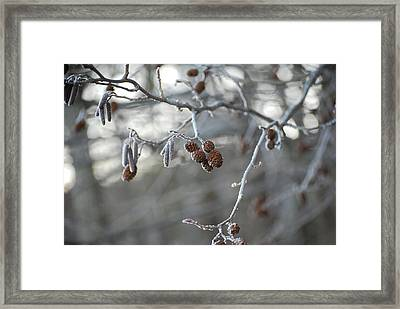 Frost Framed Print by Peter  McIntosh