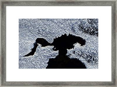 Frost Pups Framed Print by Bill Morgenstern