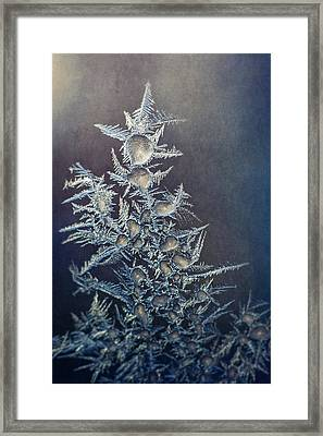 Frost Framed Print by Scott Norris