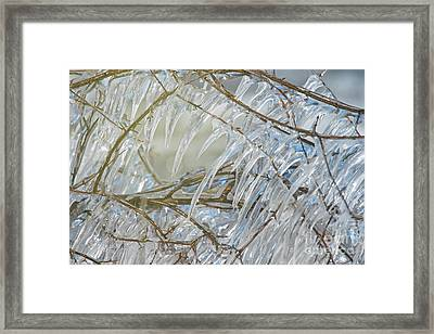 Framed Print featuring the photograph Frostbite.. by Nina Stavlund