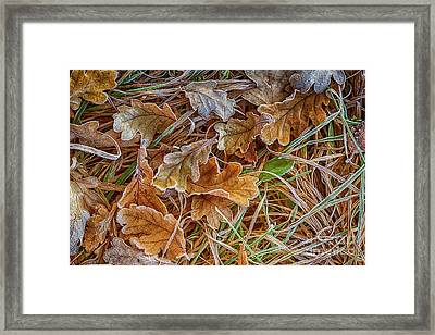 Frosted 2 Framed Print