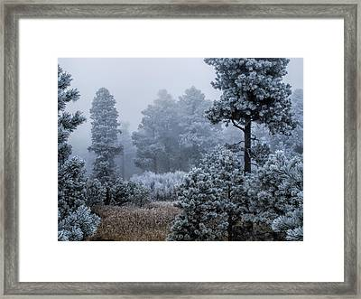 Frosted Framed Print by Alana Thrower