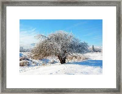 Frosted Apple Tree Framed Print by Mike Dawson