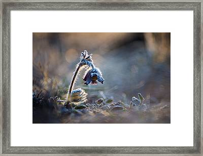 Frosted Beauty Framed Print