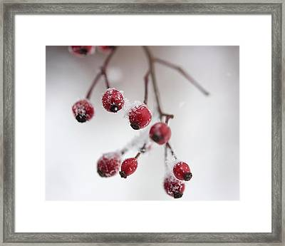 Frosted Berries Framed Print