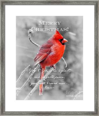 Frosted - Christmas Framed Print by Anita Faye