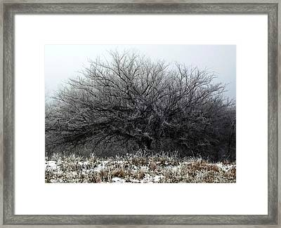 Framed Print featuring the photograph Frosted Elm by Shelli Fitzpatrick
