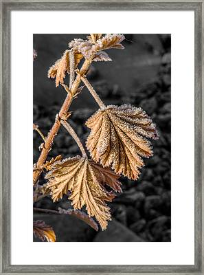 Frosted Flake Framed Print by Paul Freidlund