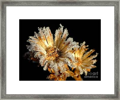 Frosted Flowers Framed Print