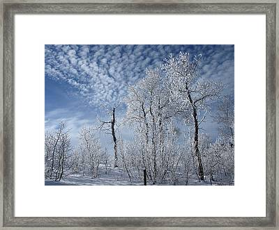 Frosted Hilltop Quakies Framed Print