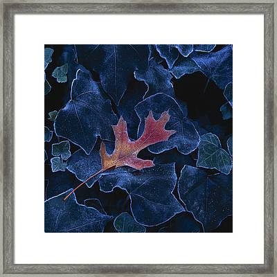 Frosted Leaf And Ivy Framed Print