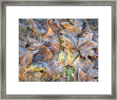 Frosted Leaves 8x10 Framed Print