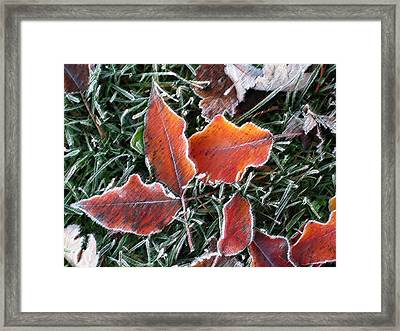 Framed Print featuring the photograph Frosted Leaves by Shari Jardina