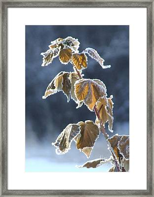 Frosted Framed Print by Marianne NANA Betts