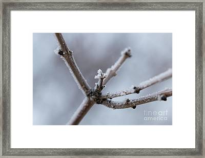 Framed Print featuring the photograph Frosted Morning by Ana V Ramirez