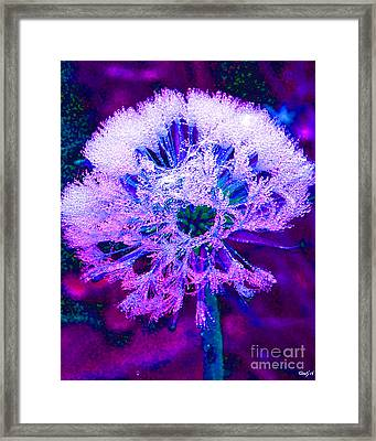 Frosted Framed Print by Nick Gustafson