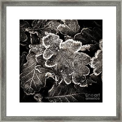 Frosted Oak Leaves . Framed Print by Bernard Jaubert