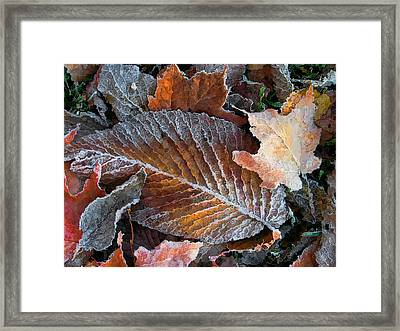 Framed Print featuring the photograph Frosted Painted Leaves by Shari Jardina