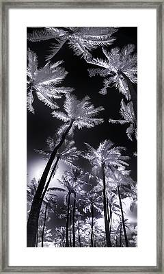 Frosted Palms Framed Print by Sean Davey