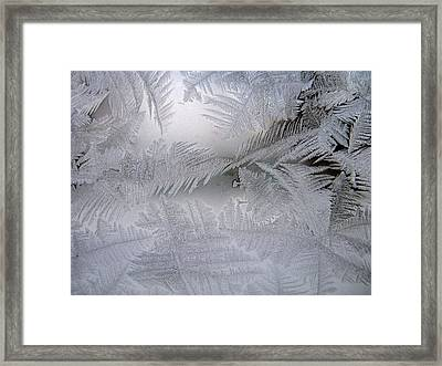 Frosted Pane Framed Print