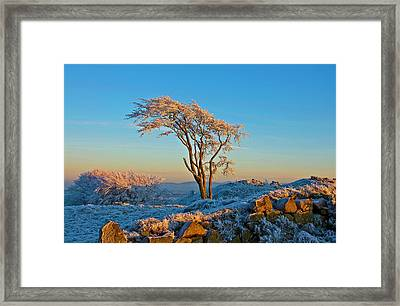 Frosted Tree Framed Print by Mark Denham